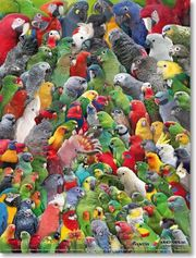 WhatsApp Gruppe Papageienfreunde