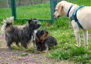 Schulung - Ihr Hund hört auf