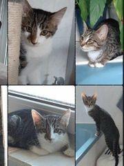 Baby Kätzchen Kitten Kater Katze