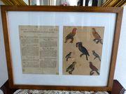 2 Kupferstiche Papageien antik gerahmt
