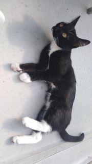 Junge weibliche Katze sucht liebevolles