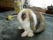 Heute tolle Rasse Kaninchen abzugeben