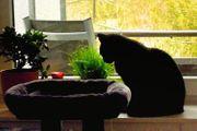 Katzenbetreuung Katzensitter Kleintiere Sonstige