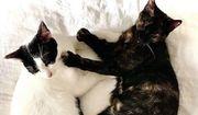 Zas Boo sehbehinderte Katzen ca