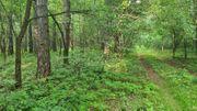 Begleitung für bushcraft Tour
