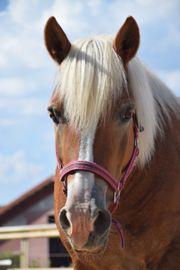 Reitbeteiligung zu vergeben Pferd sucht