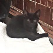 Ceana - kleines Katzenmädel sucht noch