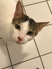 Katze Tatzi sucht dringend ein