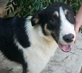 Cody super netter Cody möchte: Kleinanzeigen aus Mühlacker Lomersheim - Rubrik Hunde