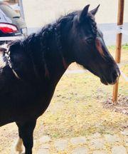 Ponyreiten Nachmittag mit Pferden