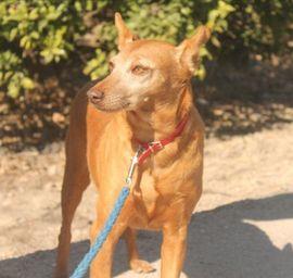 Ein Wunder für Colajet: Kleinanzeigen aus Augsburg Innenstadt - Rubrik Hunde