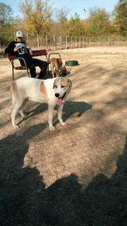 Bucky Tierschutzhund
