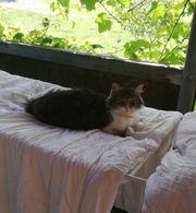 Katze in Andelsbuch vermisst