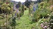Garten in der Natur mit
