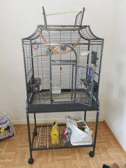 Ein Pärchen Sperlingspapagei Käfig und