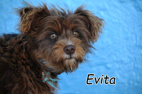 Darf Evita ihren persönlichen Sonnenschein werden? ? ?