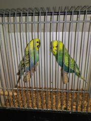 Verschiedene Vögel abzugeben