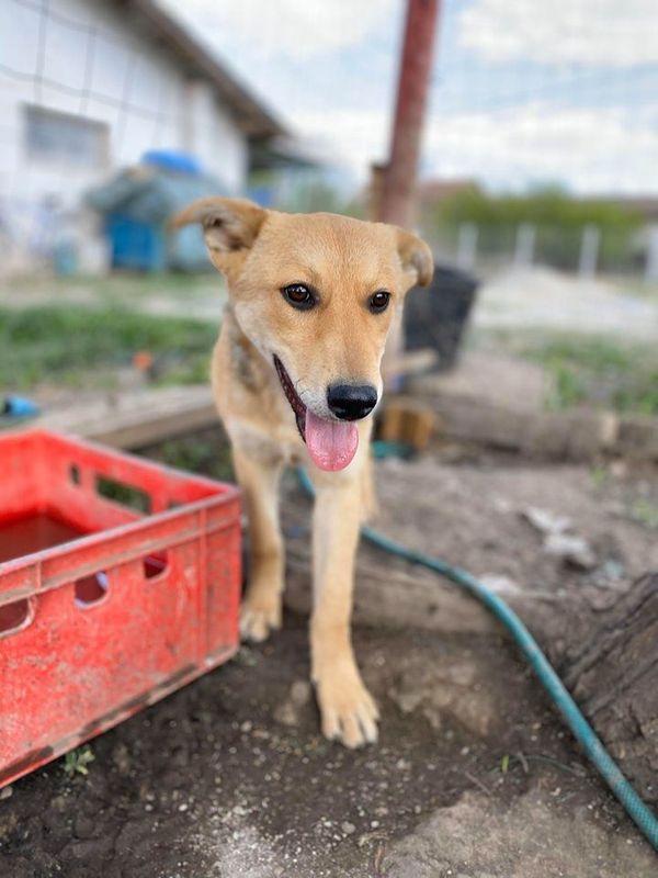 Violet 10 Monate Eine Sehr Susse Maus In Nurnberg Hunde