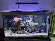 Salzwasser Red Sea Reefer Meerwasser