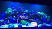 Großes Meerwasseraquarium Spitzentechnik