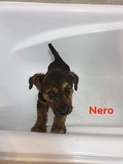 Nero sucht eigenes Zuhause