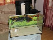 Fischglas 60x30x30 cm zu verkaufen