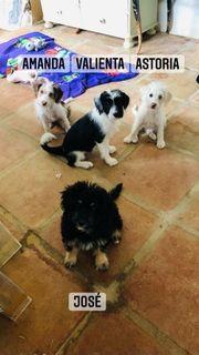 Zauberhafte Spanische Wasserhund Welpen suchen