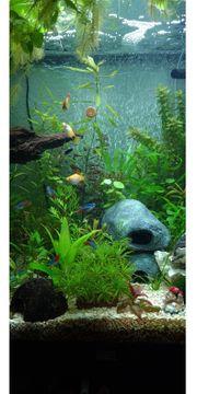 Aquarium Besatz abzugeben