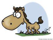 Pferd Pony gesucht