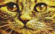 Vorlage für Ministeck Cat4 80x60cm