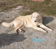 Rouli sucht sein Zuhause