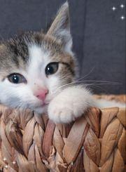 Zwei süße Kätzchen suchen