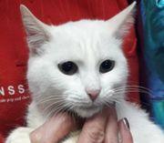 Kätzchen Blanca sucht Dich zum