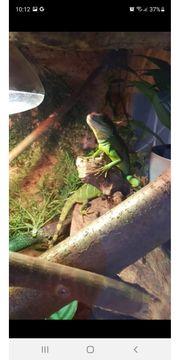 Nehmen Reptilien auf
