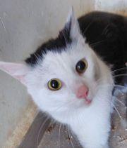 Vermittlungshilfe für Katzen