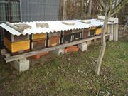 Bienenvolk mit Honigraum