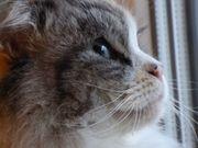 Tierbetreuung Housekeeping Katzenbetreuung Hundebetreuung