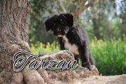 Darf Tarzan ihr Dschungelheld werden