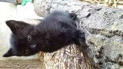 Katzenbaby sucht noch ihre neue