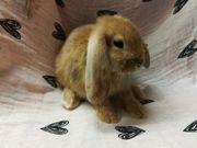 Verschiedene Kaninchen Babys super lieb