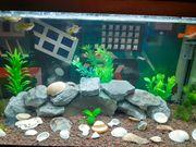 Aquarium 60x30x30cm
