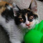 Kätzchen Onni sitzt auf gepacktem