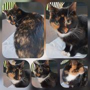 Wunderschöne junge Mai Katze kastriert