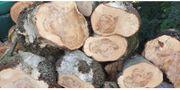 Birke- Europäische Lerche Holz preiswert