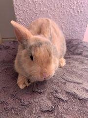 7 Kaninchen
