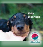 Fritz - wer möchte meinen Bart