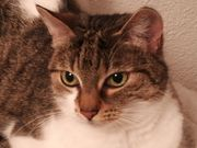 Süsse Katze sucht neues Zuhause