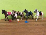 Wendy Grand Champion Pferde