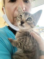 Süsse Kitten geimpft
