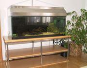 Gepflegtes Aquarium